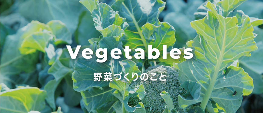 Vegetables 野菜づくりのこと