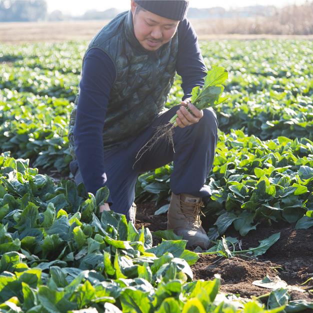 """""""ほうれん草畑""""収穫時期をこまめにチェックし、美味しい時期にお客さんの元に届くよう心がけています!"""