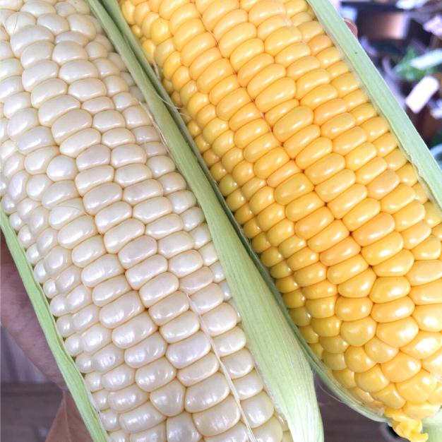 "Vegeboyといえば""朝採りトウモロコシ""地域最速!6月初旬から収穫がはじまります。感動の甘さ!"