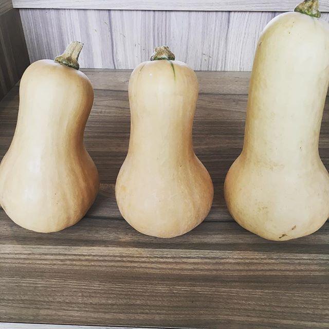 まんぼうマルシェの日々