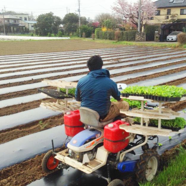 元気に育った苗を畑に定植します!畑にしっかり根付くように天気と相談しながら行う大事な作業です。
